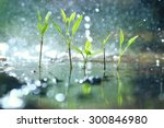 grass dew rain macro fresh... | Shutterstock . vector #300846980