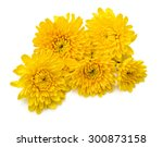 Yellow Chrysanthemum Flowers...