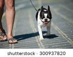 Stock photo with the dog in the city 300937820