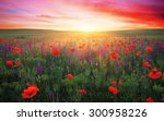 field with grass  violet... | Shutterstock . vector #300958226