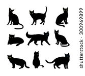 cats set. animal pet  wildcat... | Shutterstock . vector #300969899