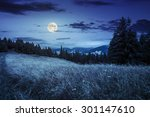 meadow with tall grass on a mountain top near coniferous forest at night in full moon light - stock photo