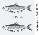 herring vector illustration | Shutterstock .eps vector #301157960