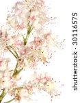 chestnut flower isolated on... | Shutterstock . vector #30116575