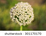 blooming onion | Shutterstock . vector #301170170