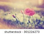 field of corn poppy flowers... | Shutterstock . vector #301226273