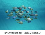 Tropical Fish Schooling ...