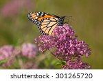 monarch butterfly  danaus... | Shutterstock . vector #301265720