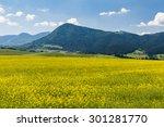 nature in liptov region ... | Shutterstock . vector #301281770