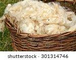 Shaven Wool In Basket