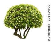 green bush isolated on white... | Shutterstock . vector #301414970