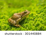 frog in the grass | Shutterstock . vector #301440884