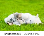 Stock photo tabby kitten lying with sleeping white swiss shepherd s puppy on green grass 301464443