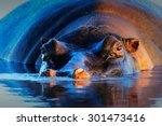 hippopotamus  hippopotamus... | Shutterstock . vector #301473416