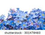forget me flower on a white... | Shutterstock . vector #301478483