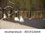 seagulls fly in the sky at bang ... | Shutterstock . vector #301512644