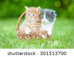 Stock photo two little kittens sitting in the basket 301513700