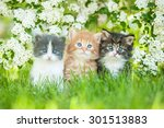 Stock photo three little kittens sitting near white flowers 301513883