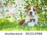 Stock photo american staffordshire terrier dog with little kitten lying in flowers 301513988