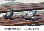 two pigeons look around on a... | Shutterstock . vector #301521248