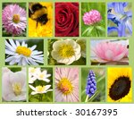 Assortment Flowers