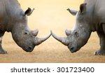 white rhinoceros  ceratotherium ... | Shutterstock . vector #301723400