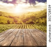 blurred background of vineyard... | Shutterstock . vector #301728539