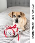 tan colored terrier mix dog... | Shutterstock . vector #301736060