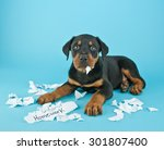 Funny Rottweiler Puppy That...