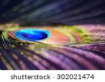 Abstract Macro Peacock Feather...