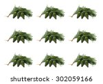 green cone on a pine branch on... | Shutterstock . vector #302059166