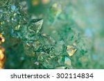 Druse Green Crystals Agate Sio...