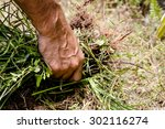 man hand is holding a bunch of...   Shutterstock . vector #302116274
