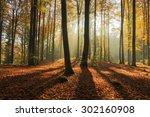 autumn forest in north poland... | Shutterstock . vector #302160908
