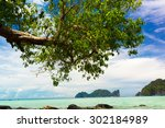 Island Lagoon Branches...