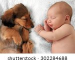 Stock photo newborn baby girl and dachshund puppy asleep on a white blanket 302284688