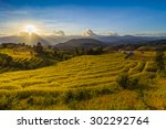 dramatic sunset over a rice... | Shutterstock . vector #302292764