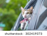 Stock photo cat happy with her head out of a car window 302419373