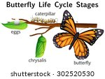 Butterfly Life Cycle Stages...