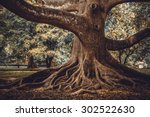 the root of the tree in the... | Shutterstock . vector #302522630