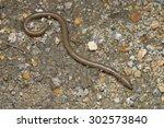 close up image of an earthworm | Shutterstock . vector #302573840