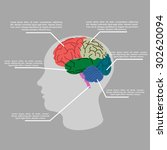 brain. vector graphs elements.... | Shutterstock .eps vector #302620094