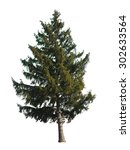 Evergreen Tree Isolated On...