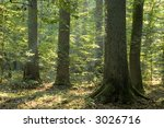 old forest in the morning end... | Shutterstock . vector #3026716