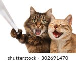 Stock photo funny cats self picture couple of cat taking a selfie together with smartphone camera 302691470