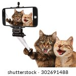 funny cats   self picture.... | Shutterstock . vector #302691488