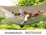 relaxing dog | Shutterstock . vector #302701610