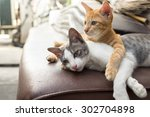 Stock photo lovely kitten laying down together 302704898
