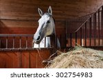 White Horse Eating Hay In The...