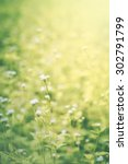 Flowers Grass Motion Blur With...
